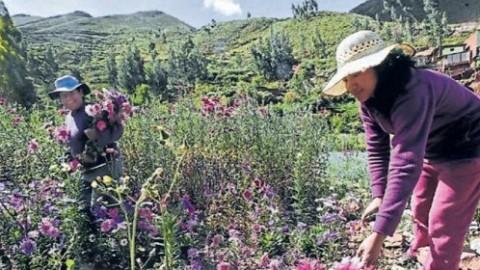 Ayacucho: mujeres de la región tienen menos acceso a educación